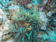 05 Woodhouse Reef Garden A-IMG_0080