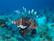 08 Gordon Reef-IMG_0245