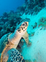 08 Gordon Reef-IMG_0255