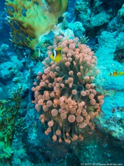 05 Woodhouse Reef Garden A-IMG_0068