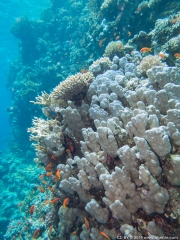 05 Woodhouse Reef Garden A-IMG_0117